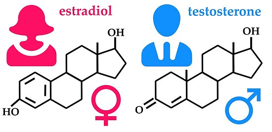 CANCELED – Estrogen And Testosterone